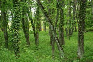 Estar entre los árboles nos impide ver la totalidad del bosque.