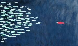 Nadar contra la corriente tiene serias implicaciones, particularmente en el tiempo que invertimos en aprender algo.