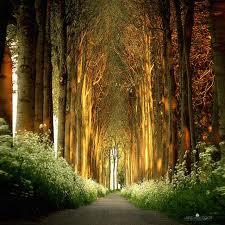 Conocer el camino del medio dependerá de la atención que pongamos a nuestras acciones.