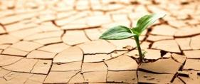 Al igual que la naturaleza,  nosotros siempre encontramos la manera de crecer, sin importar las circunstancias.