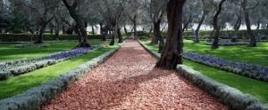 El camino arcilloso del jardín del templo solo posee las huellas de la apreciación y la auto-observación.