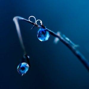 La vida, al igual que una gota de rocío, solo dura un instante. No te la pierdas.