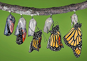 Si rompes el capullo para ayudar a la mariposa a salir, la matarás. Sus alas necesitan de ese esfuerzo para fortalecerse.