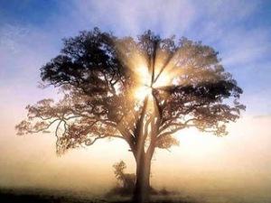"""La """"muerte"""" no es más que un paso para alcanzar la iluminación."""