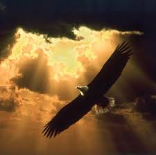 Al igual que águila que en cada inviernos rompe su pico y se arranca las plumas. Al final el resultado no es un ave nueva, sino una mejor.