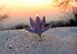 La luz aparece solo cuando podemos mirar a los egos y entender su función. Solo así, luego de entender, avanzamos.