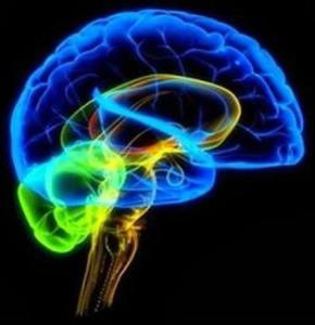 Nuestros cerebros, son dispositivos complejos sobre los que no el que no entendemos mucho.