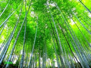 El bambú demora 6 años en germinar y luego crece 7 metros en 6 meses. Así puede ser el proceso del ego.  Depende de ti y de si quieres comenzar.