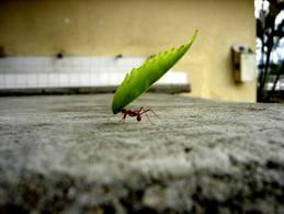 La disciplina solo es difícil cuando no sabemos que rumbo queremos tomar.