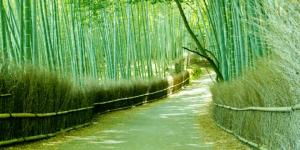 Al doblarse, el bambú se adapta al viento, evitando romperse.