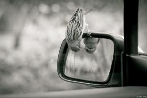 Busca la manera y mirate, si es posible, desde una perspectiva diferente.