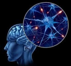 La calidad en la conexion cerebral se incrementa con una actitud de GRATITUD