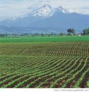 Al igual que en las plantaciones, los surcos de nuestra vidas estan harado por nuestras decisiones diarias.