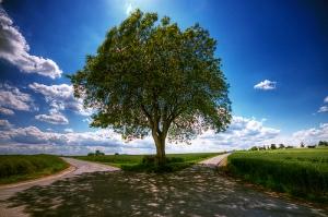 Mi felicidad del corazón depende de las decisiones que tome para renunciar al antiguo yo.