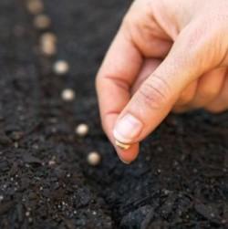 Cada contacto personal es una oportunidad de plantar semillas de luz para el crecimiento.